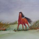 Becca's Horse