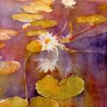 Lilies Caddo