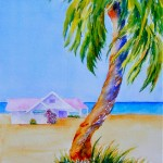 Palm & Bougainvilla