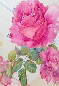 Rose 2 c