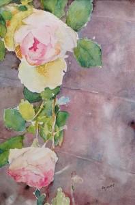 rose 1 c