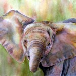 All ears baby elephant