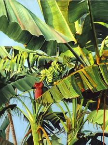 Banana Tree Goa-c