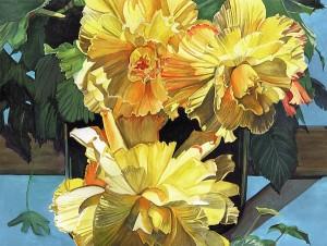 Yellow Begonia Burst