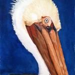 An odd bird, the pelican