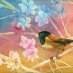 Spring junco