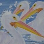 3 pelicans -wcs