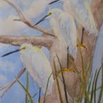 3 snowy  egrets