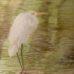 egret standing - wcs